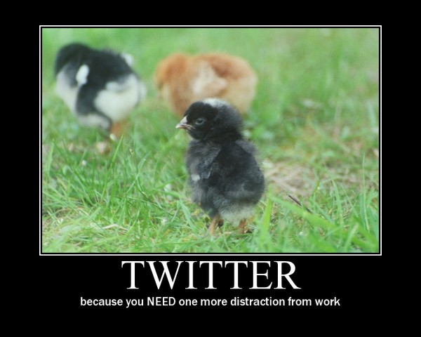 655_-_animals_chick_distraction_twitter